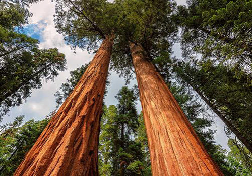 armstrong-redwoods-state-park-of-california
